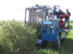 View all the machinery used in an orchard such as the harvester and pitter.