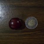 A Prairie Cherry that is as big as a toonie!