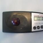 A Prairie Cherry that is 10g in weight!