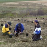 Our first planting of Prairie Cherry trees