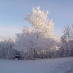 Hore Frost in the trees